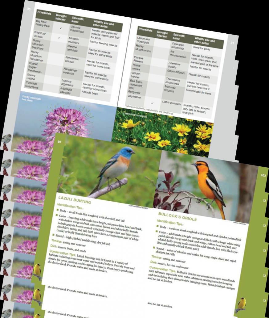 guide to the backyard birds of the front range u2013 birdconservancy org