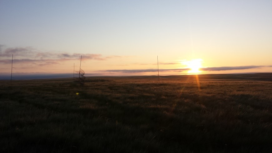 The day starts bright and early when you're chasing sparrows in the grassland – pictured is a net set-up at sunrise. Photo by Nicole Richardson.