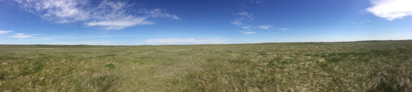 The vast expanse of the prairie – it may look like just grass, but that grass was bustling with the activity of nesting grassland birds! Photo by Kaitlyn Wilson.