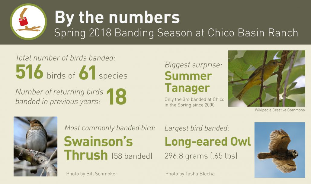 By the Numbers: Spring 2018 Banding Season at Chico Basin Ranch Total number of birds banded: 516 birds of 61 species Total number of returning birds banded in previous years: 18 birds of 8 species Most commonly banded bird: Swainson's Thrush (58 banded) Biggest surprise: A female Summer Tanager, just the 3rd banded in the Spring since 2000. Largest bird banded: Long-eared Owl (296.8 grams)