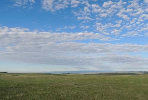 Soapstone Prairie Natural Area north of Fort Collins is a haven for grassland birds. Photo: Denis Perez