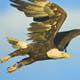 Eagle Vision 2020